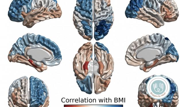 Fedme, overspisning og hjerne